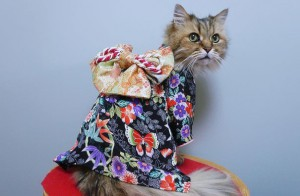 cat-kimonos-japan