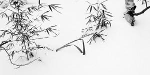 Bambù e neve_George DeWolfe_ 1995