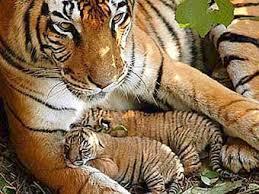 animali in via d'estinzione_3