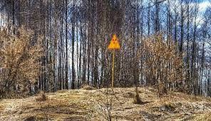 foresta rossa_2