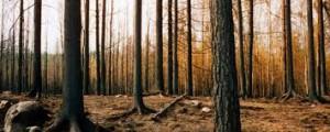 foresta rossa_3