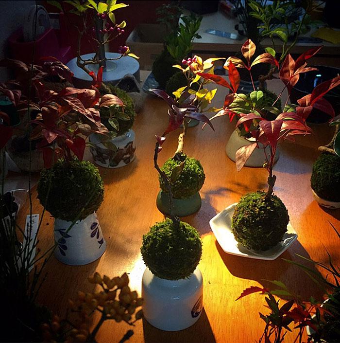 floating-bonsai-trees-air-hoshinchu-24