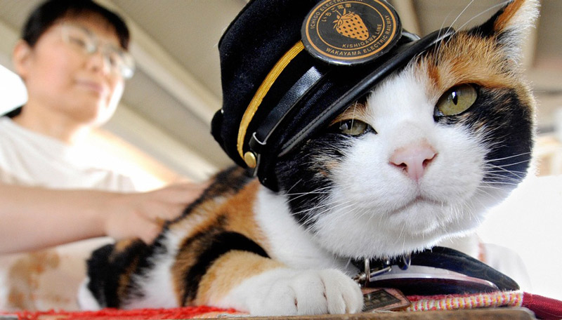 japan-station-cat-tama-super-169