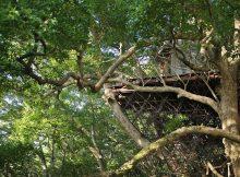 Casa sull'albero e sala da tè