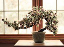 Curare un bonsai e vivere meglio