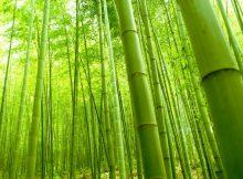 Bambù per eco-design