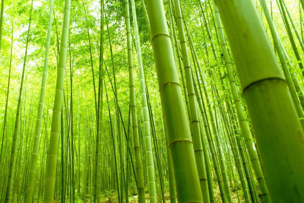 Il bamb la nuova star di eco design e arredamento zen for Arredamento bambu