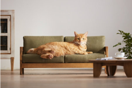 Gatto su divano