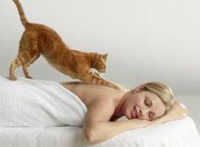 gatto massaggio